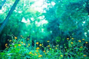 公園の花の写真